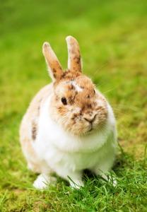 rabbit-1184702_1920